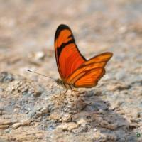 borboletas  -rio jaguari