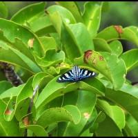 borboleta na cachoeira Véu de Noiva, Chapada dos Guimarães, Mato Grosso