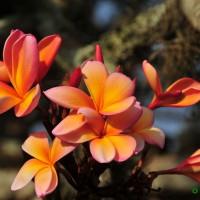 flores na ruina da fazenda, Campinas (26/12/2013)