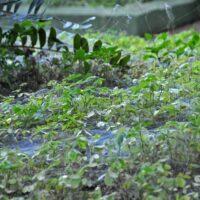 Spinnweben und Spinnennachwuchs in São Pedro