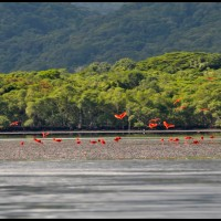 Ilha do Cardoso, litoral sul de São Paulo (04/03/2012)