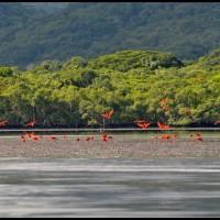 passaros na Ilha do Cardoso, litoral sul de São Paulo