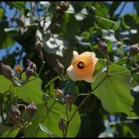 flores na Ilha Grande - passeio de escuna em Angra dos Reis (RJ)