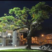 arvore em Angra dos Reis (RJ) a noite