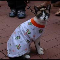 gato com casaco