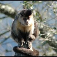 macaco no Rio de Janeiro