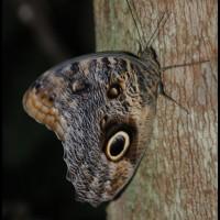 borboleta na arvore, Ribeirão  Preto