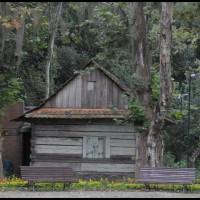 Bosque do Papa em Curitiba