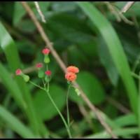 flores e plantas
