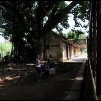 Campinas: Maria Fumaça ... chegando na estação Tanquinho