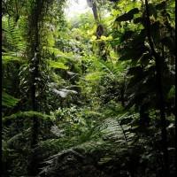 na floresta em PETAR, São Paulo