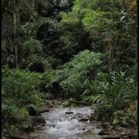 na floresta de PETAR, São Paulo