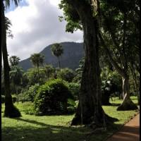 Jardimi Botânico, Rio de Janeiro